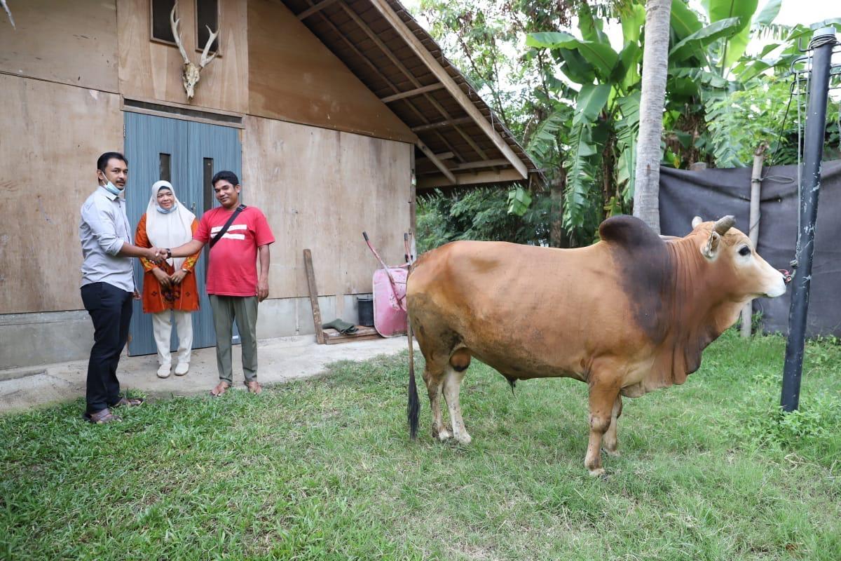 Maulid Nabi, Teuku Arief Khalifah bagikan Ratusan Kantong Daging Sapi ke masyarakat.